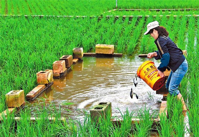 50岁的人选择在农村搞养殖,一万元投资,养什么能年收入10万元?